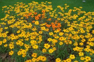 20060625_shimizupark12.jpg