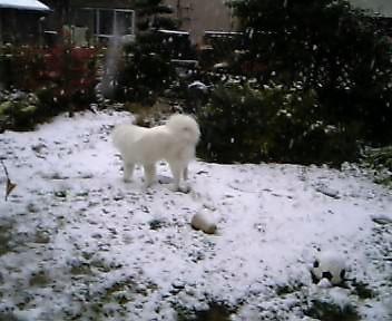 初の雪景色