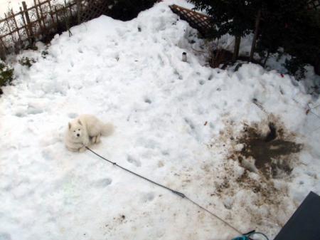 雪になすりつけて結局きれい