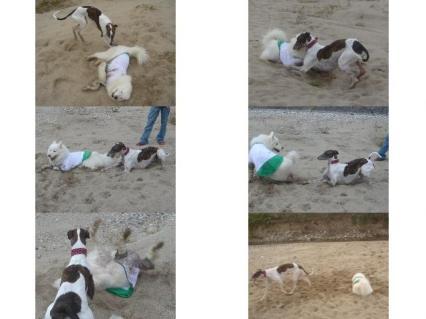 ヒトリで砂遊びしてる方が多かった