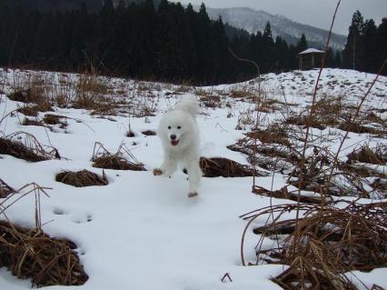 雪の上はぴょんぴょんうさぎ跳び