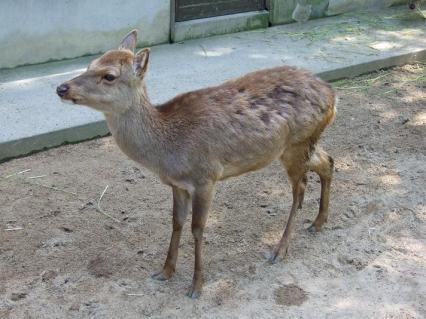 バンビです