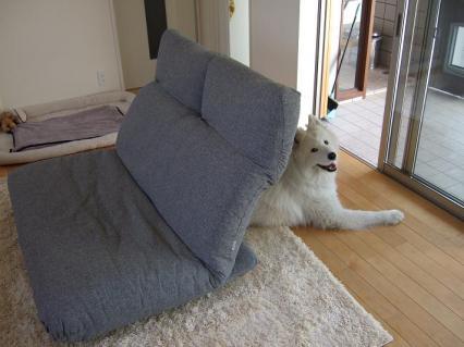 狭い部屋にでかいソファ