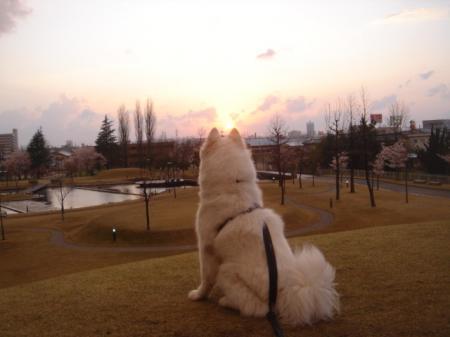 夕日を眺めてみる