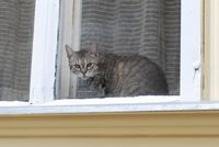 ブダペスト猫