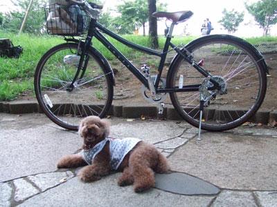 kumaと自転車クン