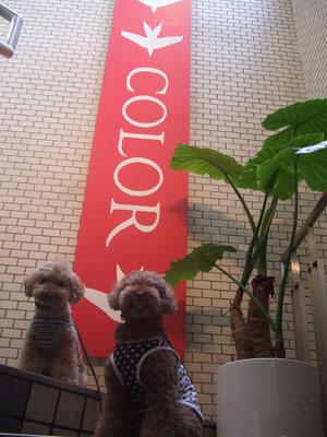 代官山 レストラン COLOR
