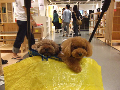 港北 IKEA(イケア)カートに2ワン