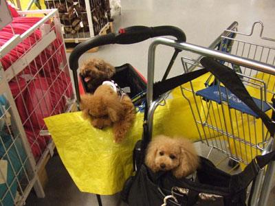 港北 IKEA(イケア)カートに2ワン と1ワン