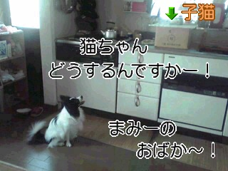 まみーのおばかー!