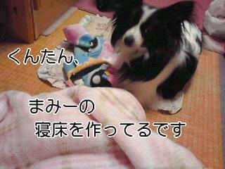 寝床作り。