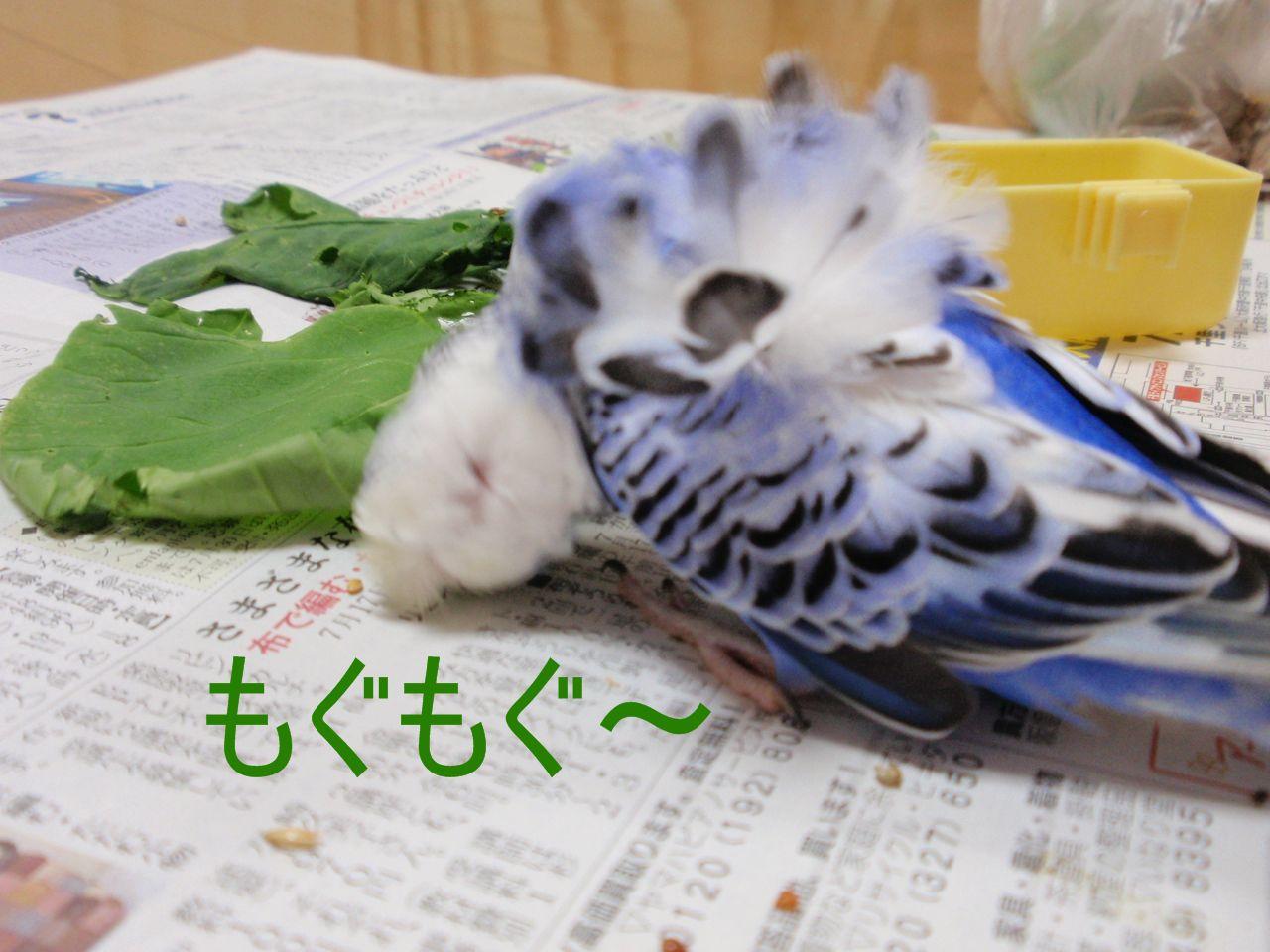 青菜ウマウマ