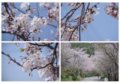 桜 (1024x715)