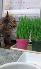 猫草喰うゆず2