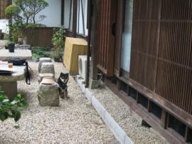tsumago-soba.jpg
