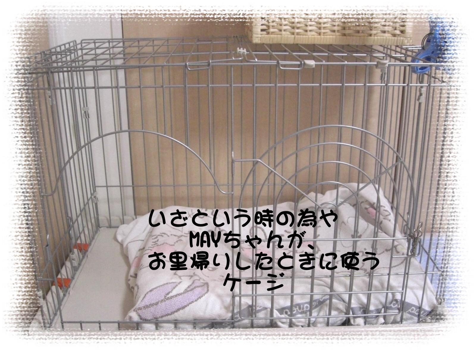 CIMG3801.jpg