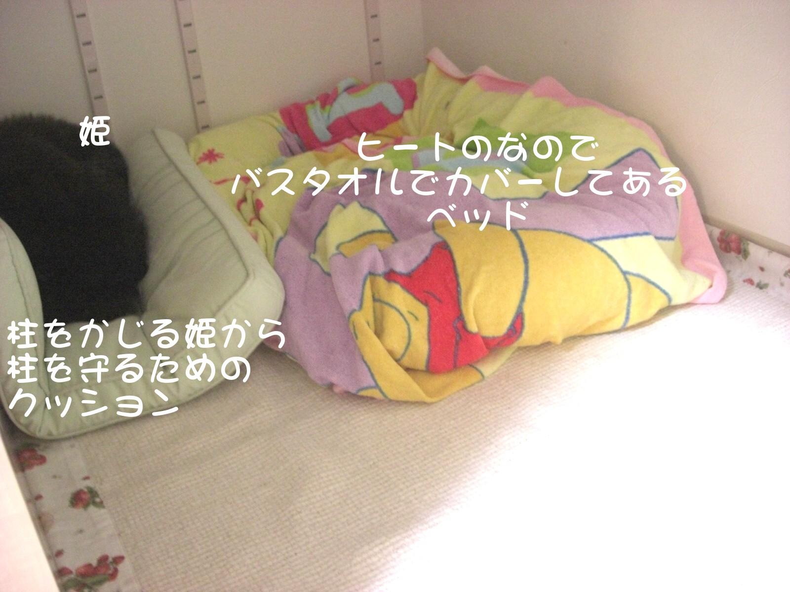 CIMG3804.jpg