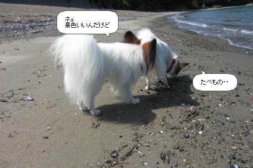 image1070273.jpg