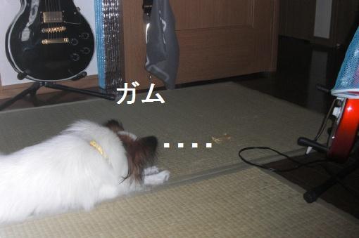 image193604.jpg