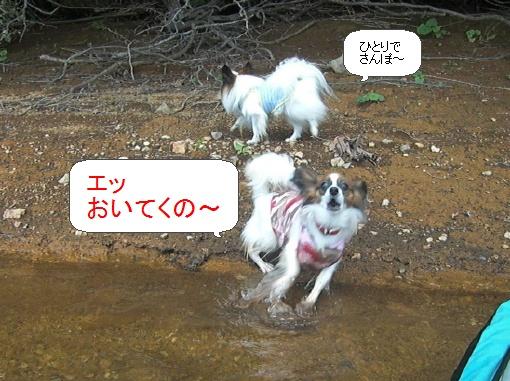 image2359893.jpg