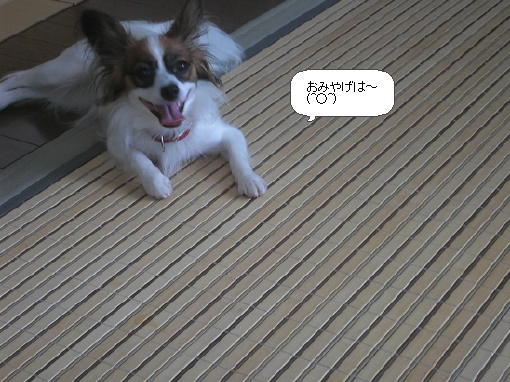image8268088.jpg
