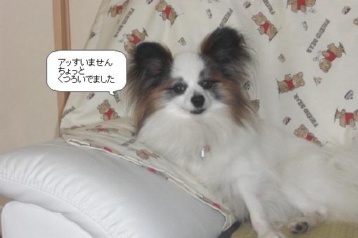 image8386204.jpg