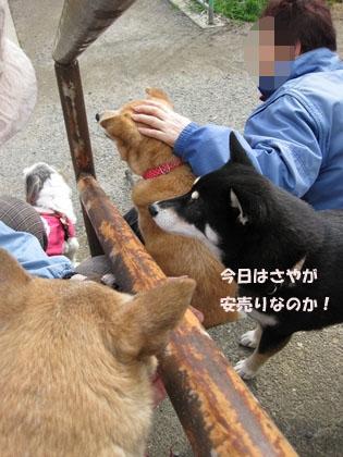 IMG_1377_Rjuのコピー