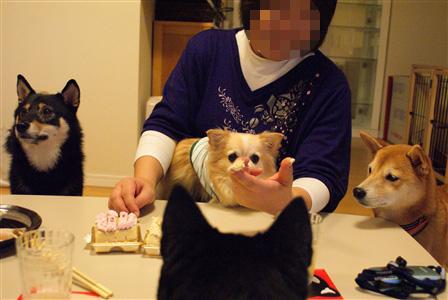 kurumi_20111120180629.jpg