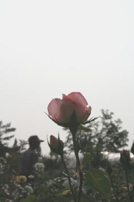 06193.jpg