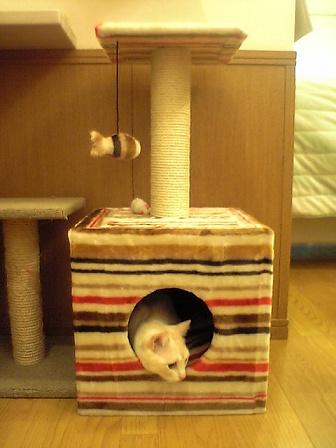 cattree3.jpg