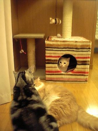 cattree4.jpg