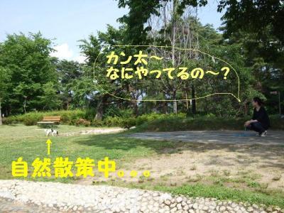 2009617-13.jpg