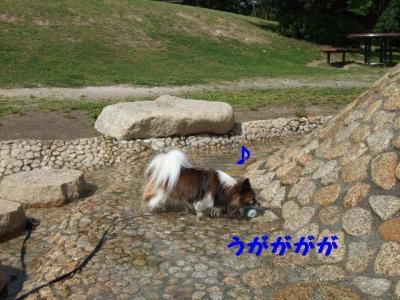 2009617-14.jpg