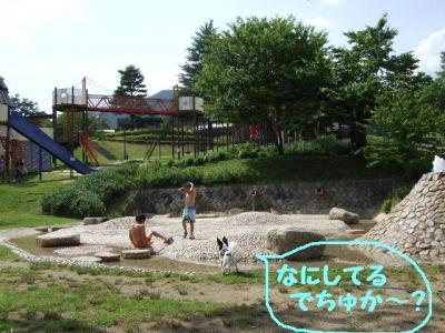 2009617-1.jpg