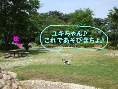 2009617-7.jpg