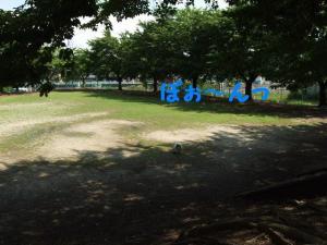 2009624-16.jpg