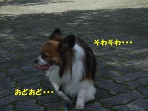 2009713-3.jpg