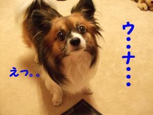 2009718-12.jpg