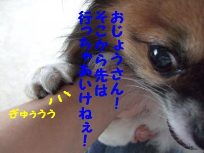 200977-5.jpg