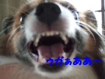 200977-8.jpg