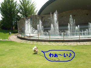 2009818-30.jpg