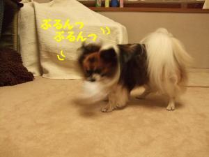 200989-9.jpg