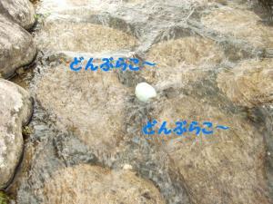 2009915-10.jpg