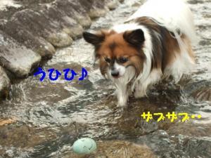 2009915-13.jpg