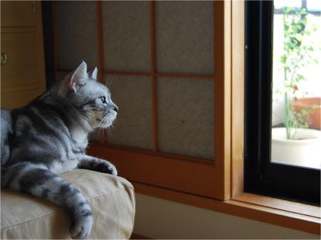 070829窓辺の空ちゃん2