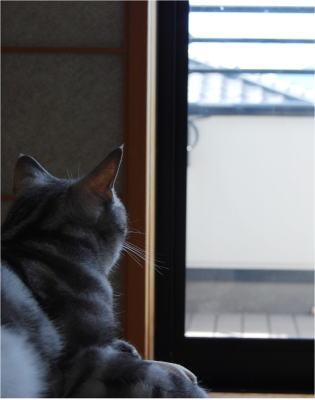 070829窓辺の空ちゃん