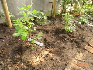 ハニーベリー2種