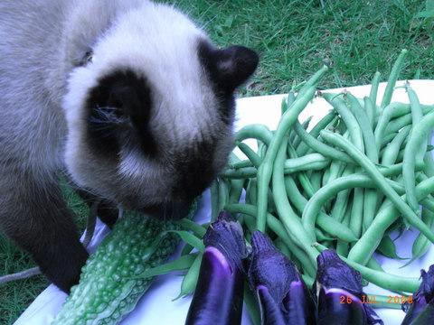 イヴと野菜