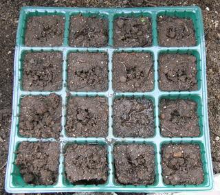 レタス、畑の土