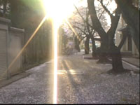 20050409.jpg